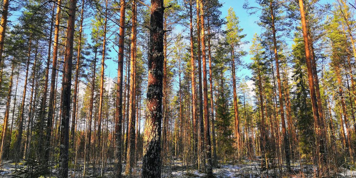 Kuvio 28, Heikkilä