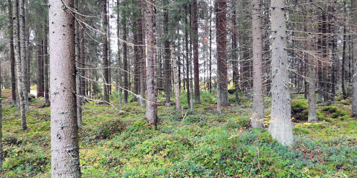 Metsätila Kankaanpää Venesjärvi