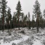 Parkano Koskenkylä kuvio 13