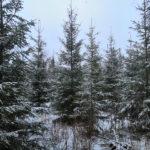 Parkano Koskenkylä kuvio 28