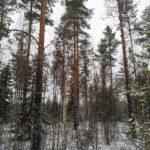 Parkano Koskenkylä kuvio 7