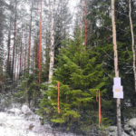 Parkano Vahojärvi kuvio 15