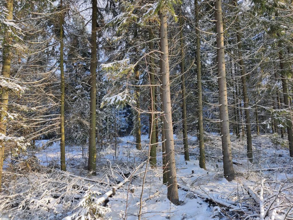 Nakkila Metsäkallo metsä