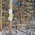 Nakkila Metsäkallo opaste metsä
