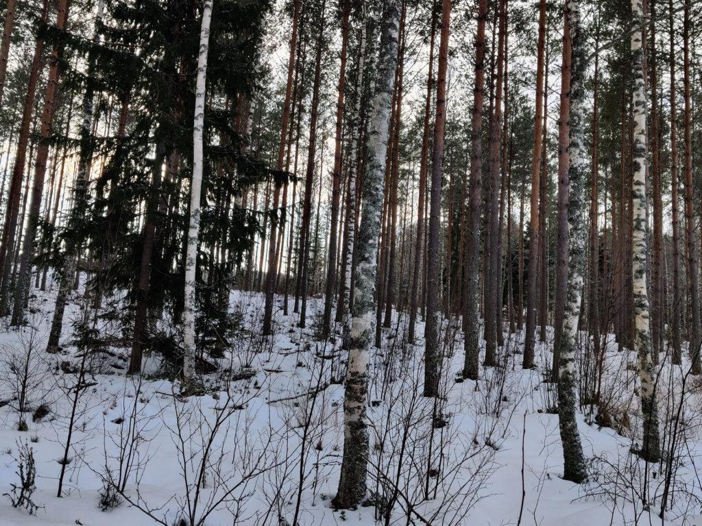 Pori Hirvimetsä metsäkuva