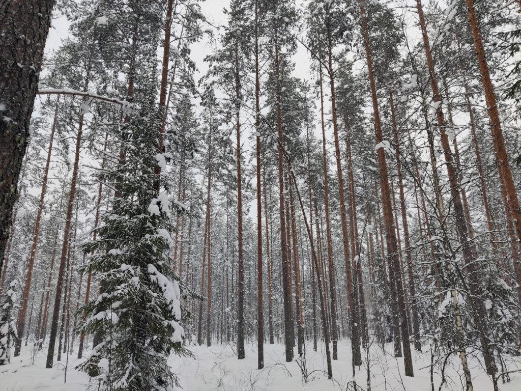 Metsä - Parkano Kivihuhta