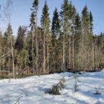 Tuulituho - Ylöjärvi Peksan pelto